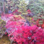 【イベント】<池袋・福生・東大和>東京空襲資料展(2017/2/28~3/16)